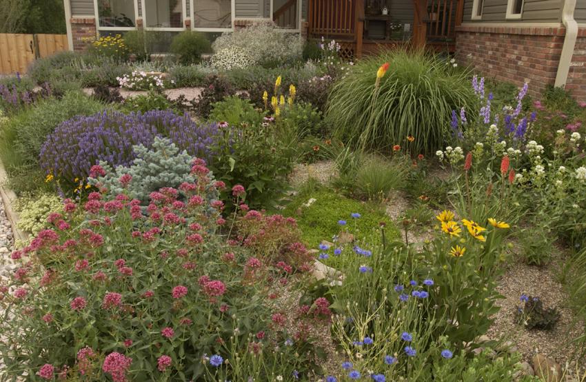 Barb Peyronnin's garden