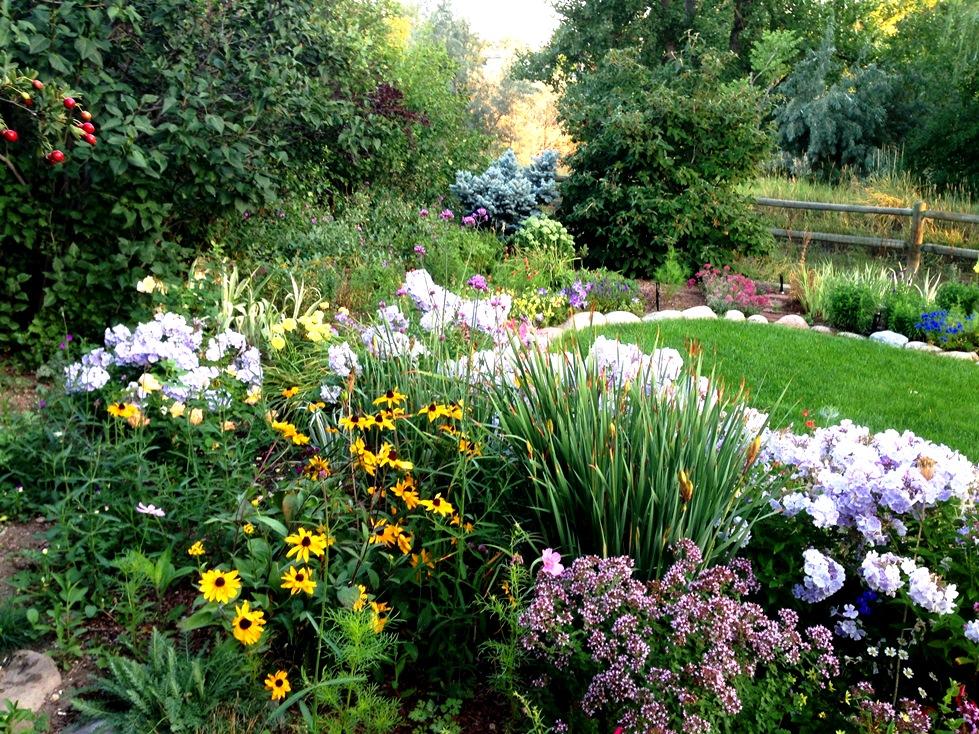 GardenIMG_0074