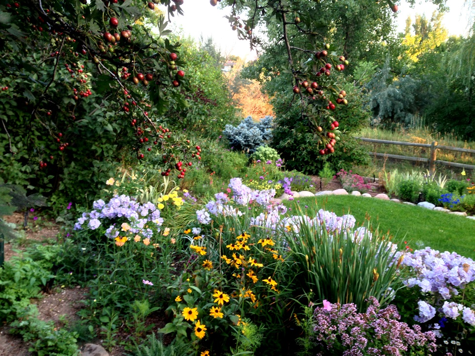 GardenIMG_0077